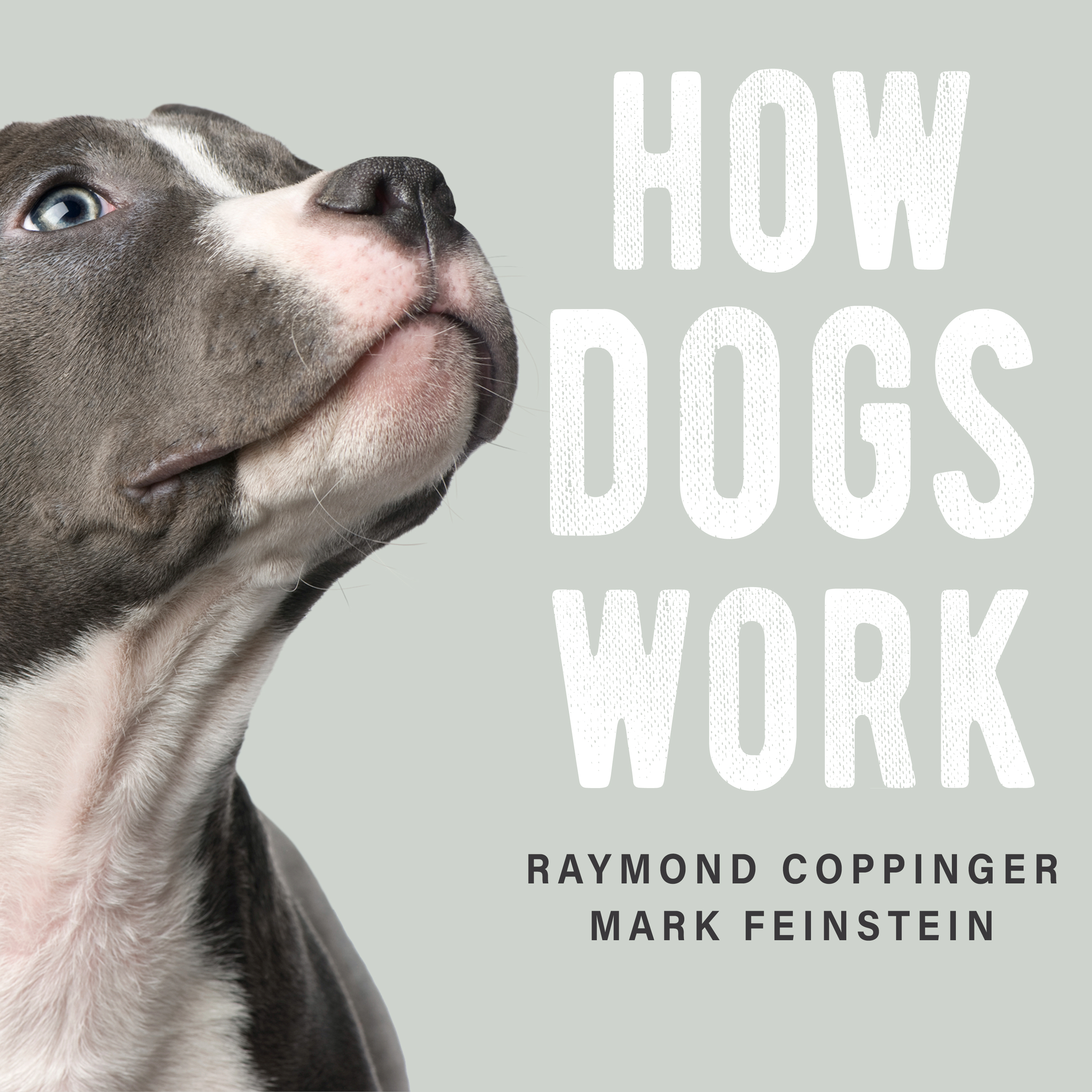 Printable How Dogs Work Audiobook Cover Art