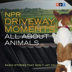 NPR Driveway Moments: All About Animals: Radio Stories That Wont Let You Go Audiobook, by NPR, Steve Inskeep