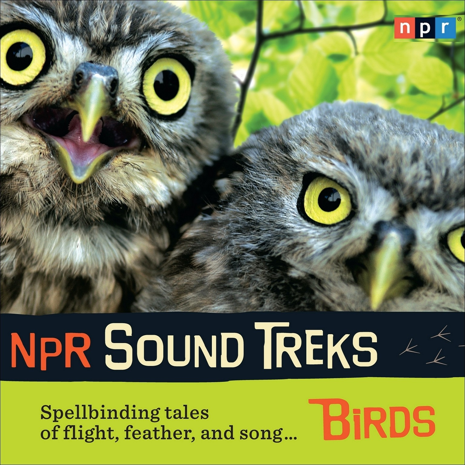 Printable NPR Sound Treks: Birds: Spellbinding Tales of Flight, Feather, and Song Audiobook Cover Art