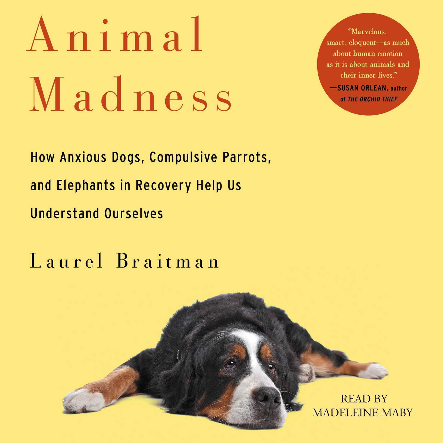 Printable Animal Madness: How Anxious Dogs, Compulsive Parrots, Gorillas on Drugs, and Elephants in Recovery Help Us Understand Ourselves Audiobook Cover Art