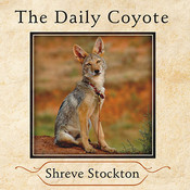 The Daily Coyote: A Story of Love, Survival, and Trust in the Wilds of Wyoming, by Shreve Stockton, Cassandra Campbell