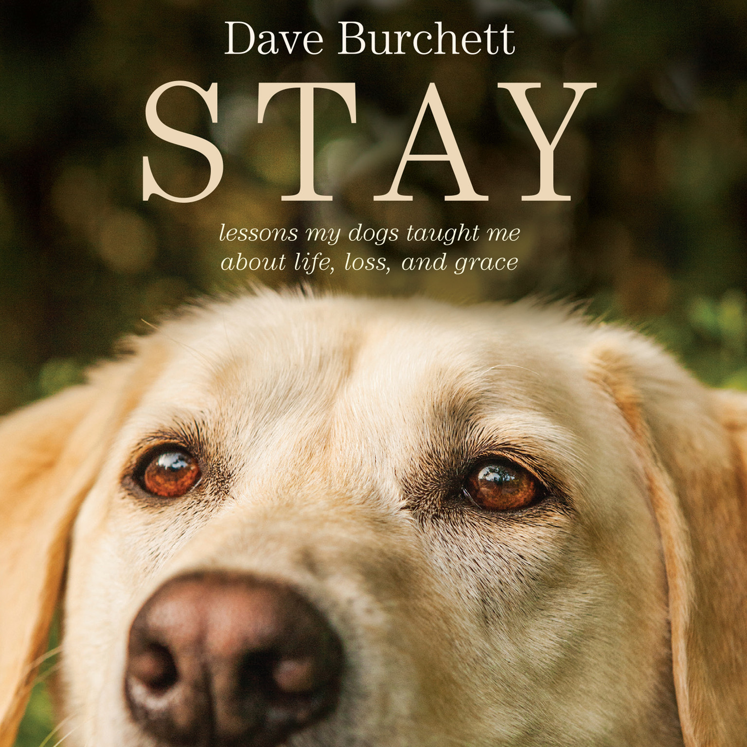 Printable Stay: Lessons My Dogs Taught Me About Life, Loss, and Grace Audiobook Cover Art