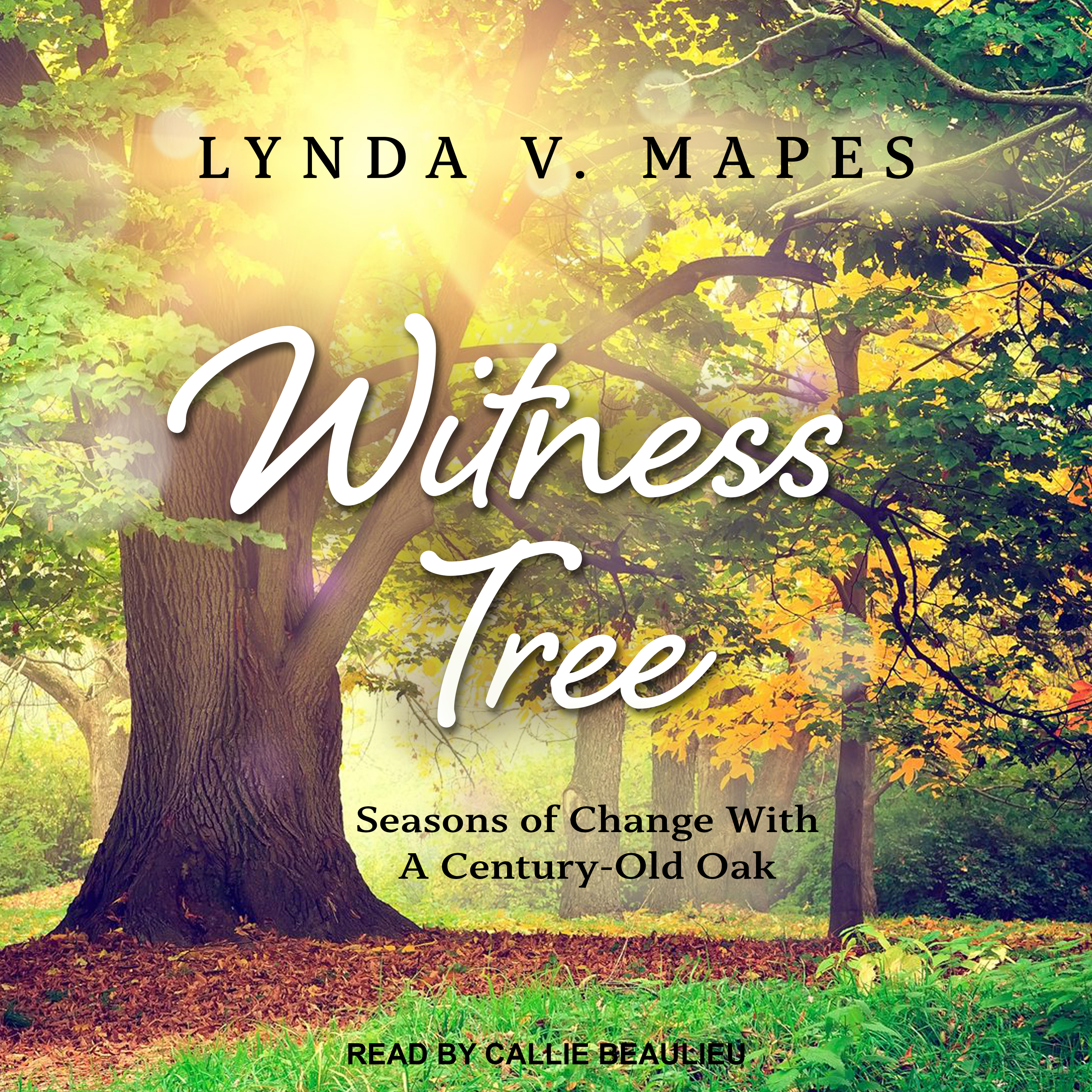 Printable Witness Tree: Seasons of Change with a Century-Old Oak Audiobook Cover Art