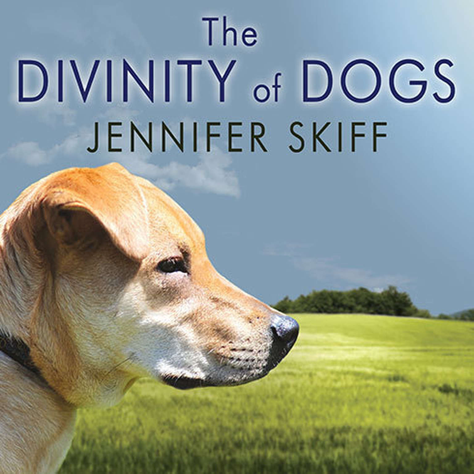 Printable The Divinity of Dogs: True Stories of Miracles Inspired by Man's Best Friend Audiobook Cover Art