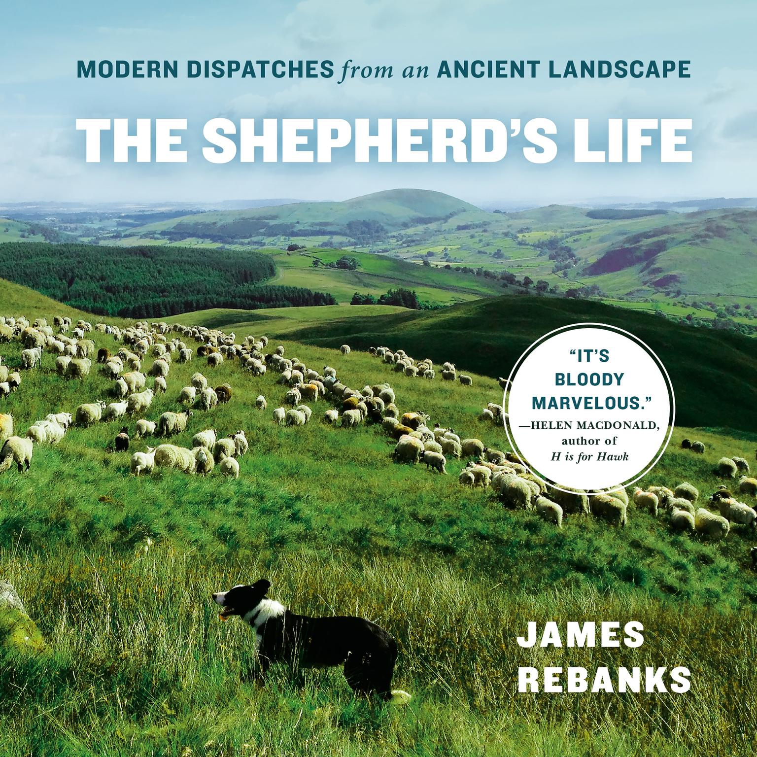Printable The Shepherd's Life: Modern Dispatches from an Ancient Landscape Audiobook Cover Art