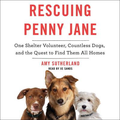 Rescuing Penny Jane: One Shelter Volunteer, Countless Dogs, and the Quest to Find Them All Homes Audiobook, by Amy Sutherland