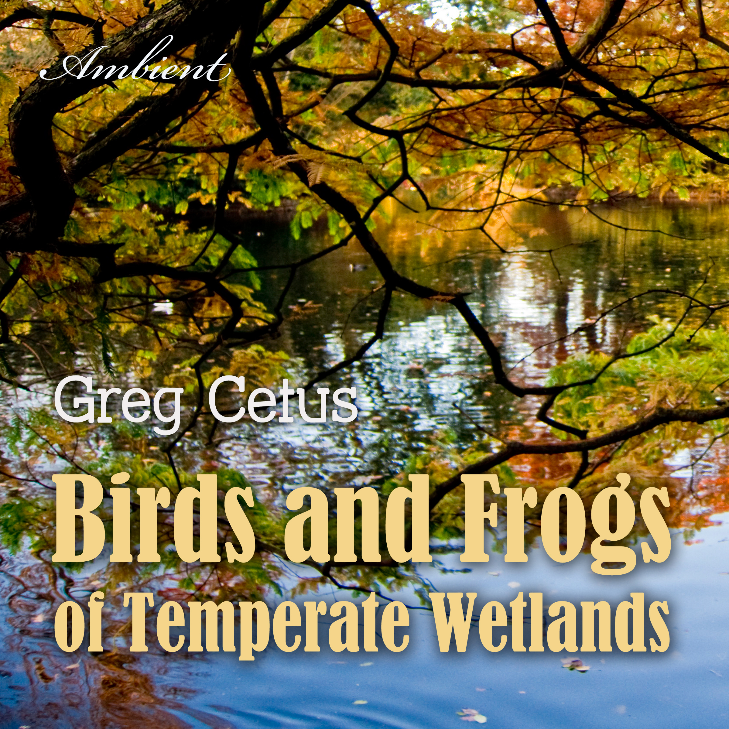 Printable Birds and Frogs of Temperate Wetlands: Atmospheric Audio for Productivity and Focus Audiobook Cover Art