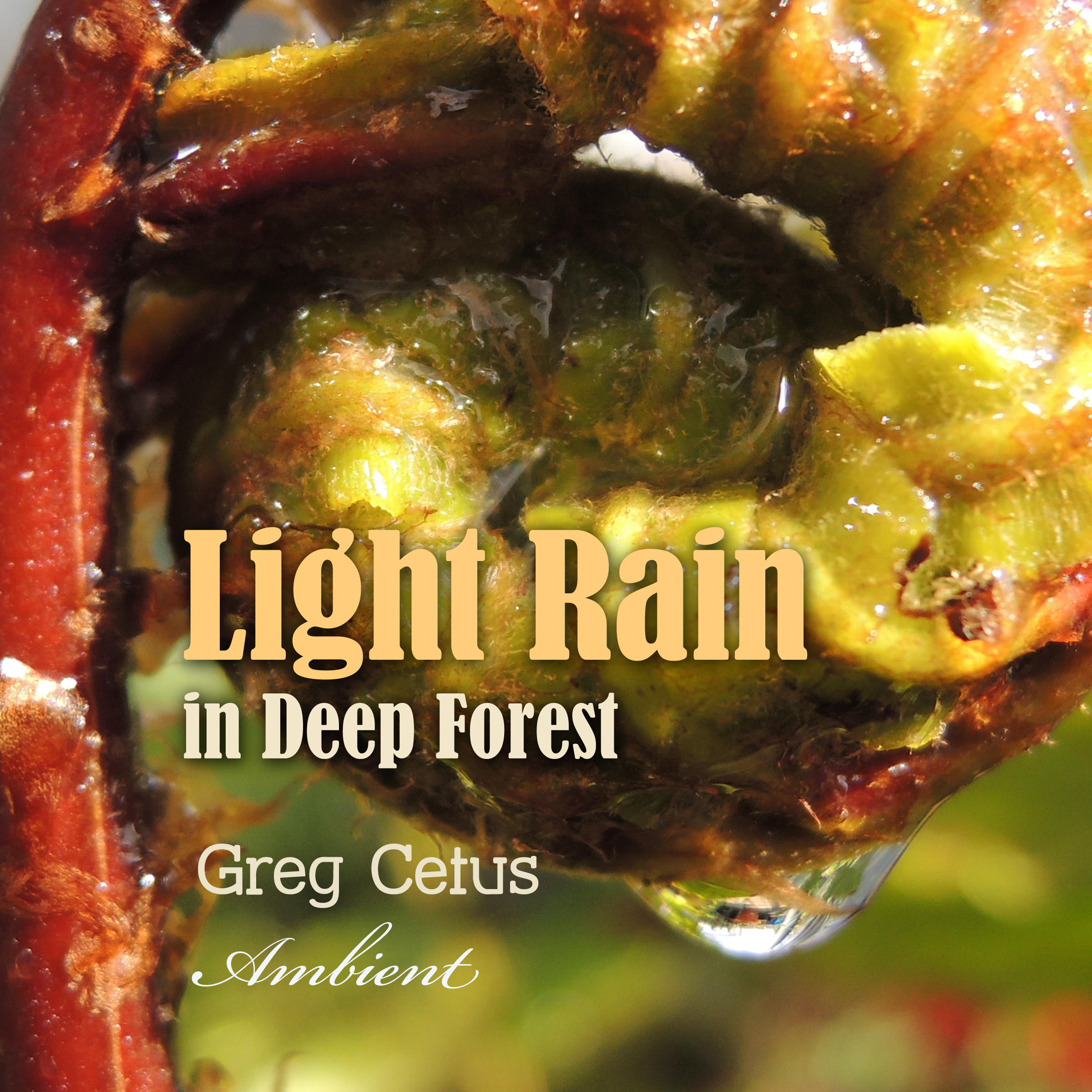 Light Rain in Deep Forest: Nature Sounds for Relaxation Audiobook