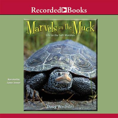 Marvels in the Muck: Life in the Salt Marshes Audiobook, by Doug Wechsler
