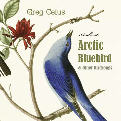 Arctic Bluebird and Other Birdsongs: Ambient Soundscape for Meditation Audiobook, by Greg Cetus