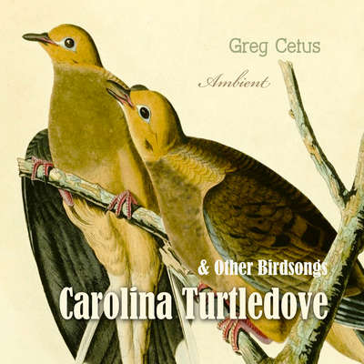 Carolina Turtledove and Other Birdsongs Audiobook, by Greg Cetus