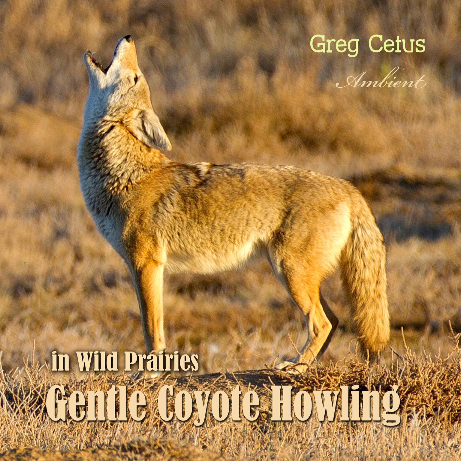 Gentle Coyote Howling in Wild Prairies Audiobook, by Greg Cetus