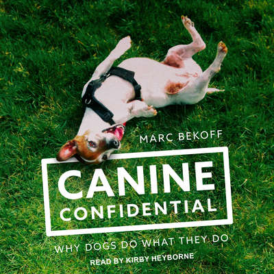 Canine Confidential: Why Dogs Do What They Do Audiobook, by Marc Bekoff