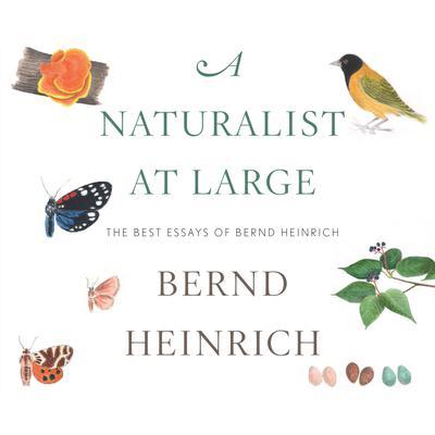A Naturalist at Large: The Best Essays of Bernd Heinrich Audiobook, by Bernd Heinrich