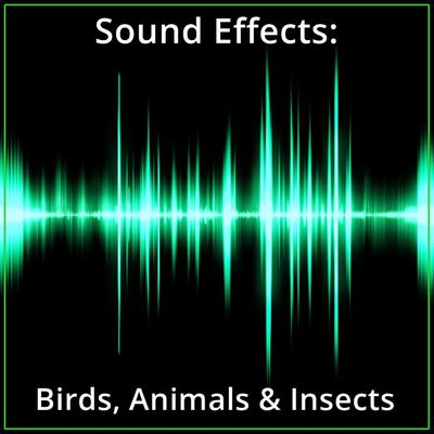 Sound Effects: Birds, Animals & Insects Audiobook, by Listen & Live Audio