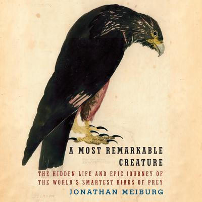 A Most Remarkable Creature: The Hidden Life and Epic Journey of the Worlds Smartest Birds of Prey Audiobook, by Jonathan Meiburg