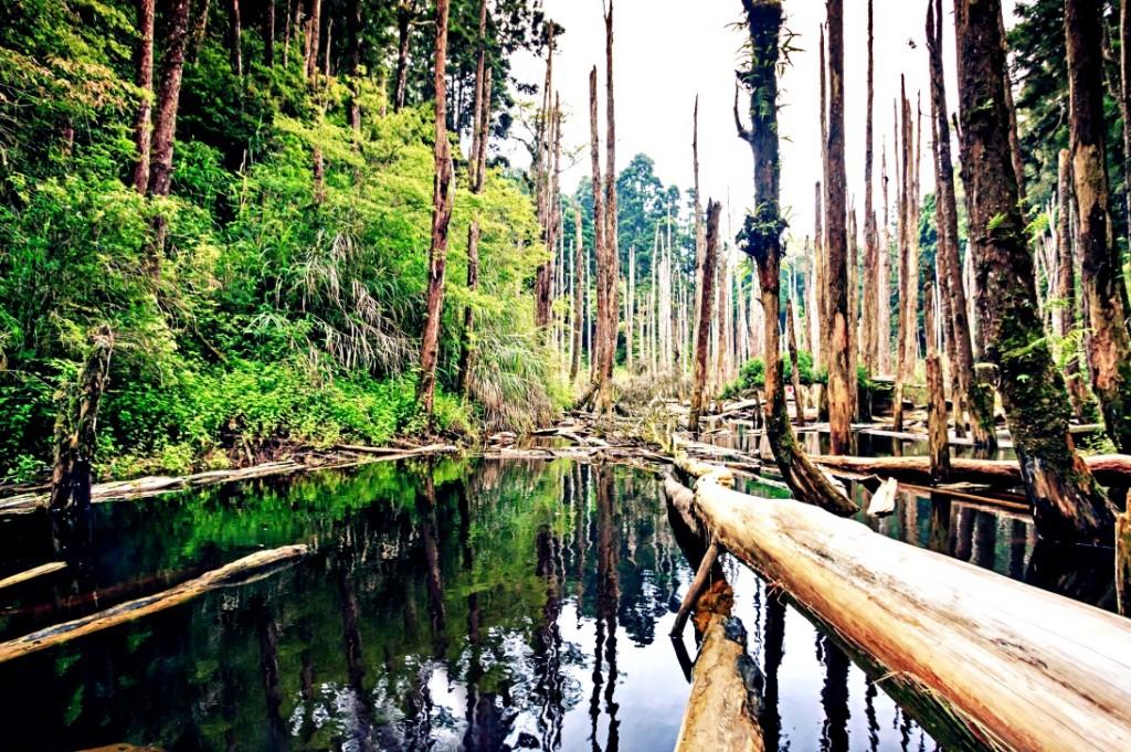Wangyou Forest in Nantou, Taiwan