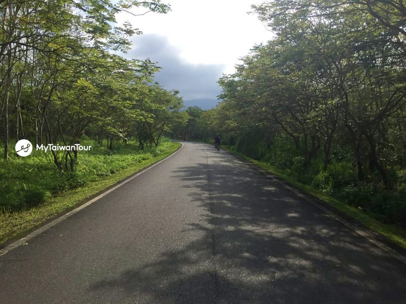 9- Danongdafu Forest Path