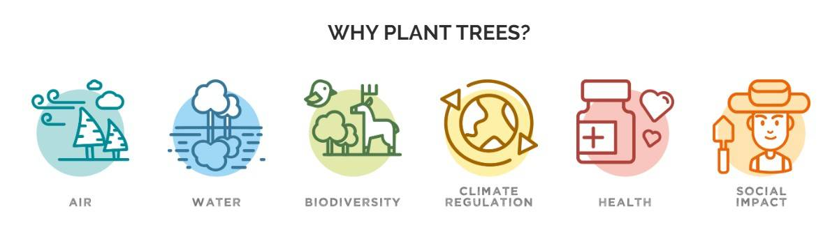 Why plant trees? Air, Water, Bio-diversity, climate regulation, health, social impact
