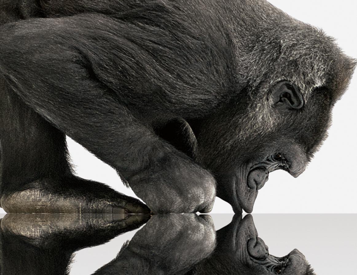 corning_gorillaglass
