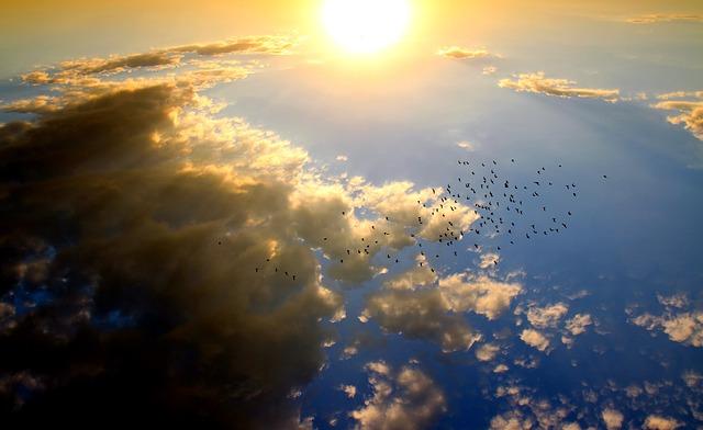 עוף גוזל, חתוך את השמיים...
