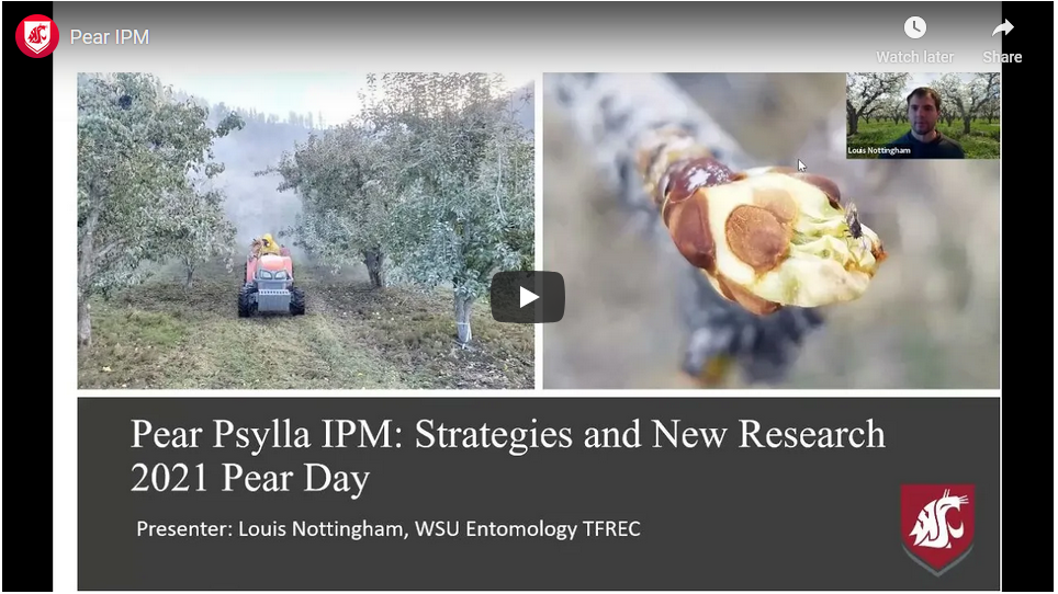 title slide of pear ipm presentation showing a tractor spraying kaolin clay in a pear orchard and a closeup of a pear bud