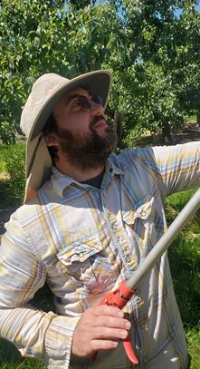 man with a beard and a floppy hat holding a pruner and looking up. he is standing in an orchard in front of green trees