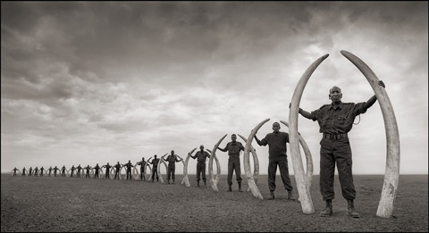 22 Rangers with Poached Elephant Tusks.