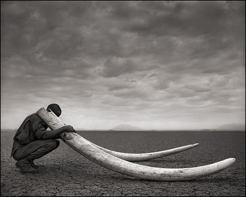 Ranger with Tusks of Killed Elephant.