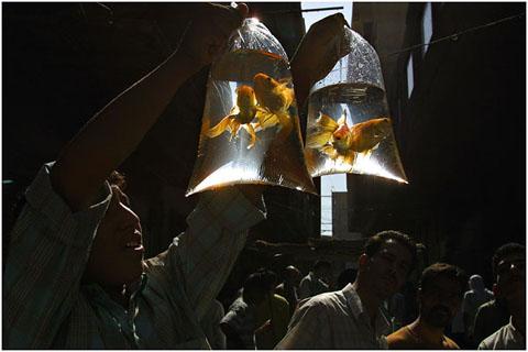 Seller of golden fishes.