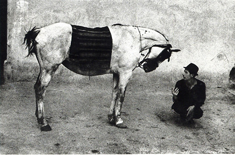 3.gypsy and horse