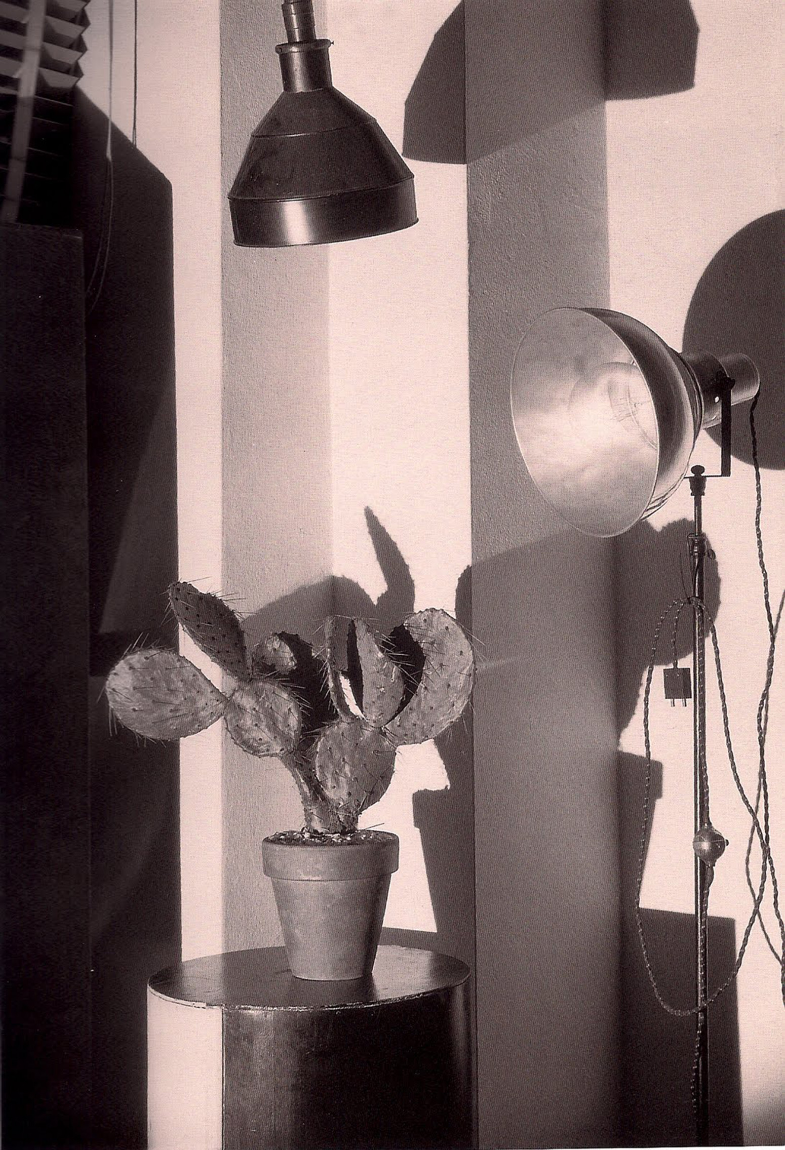 Cactus and the Photographer's Lamp/Charles Sheeler