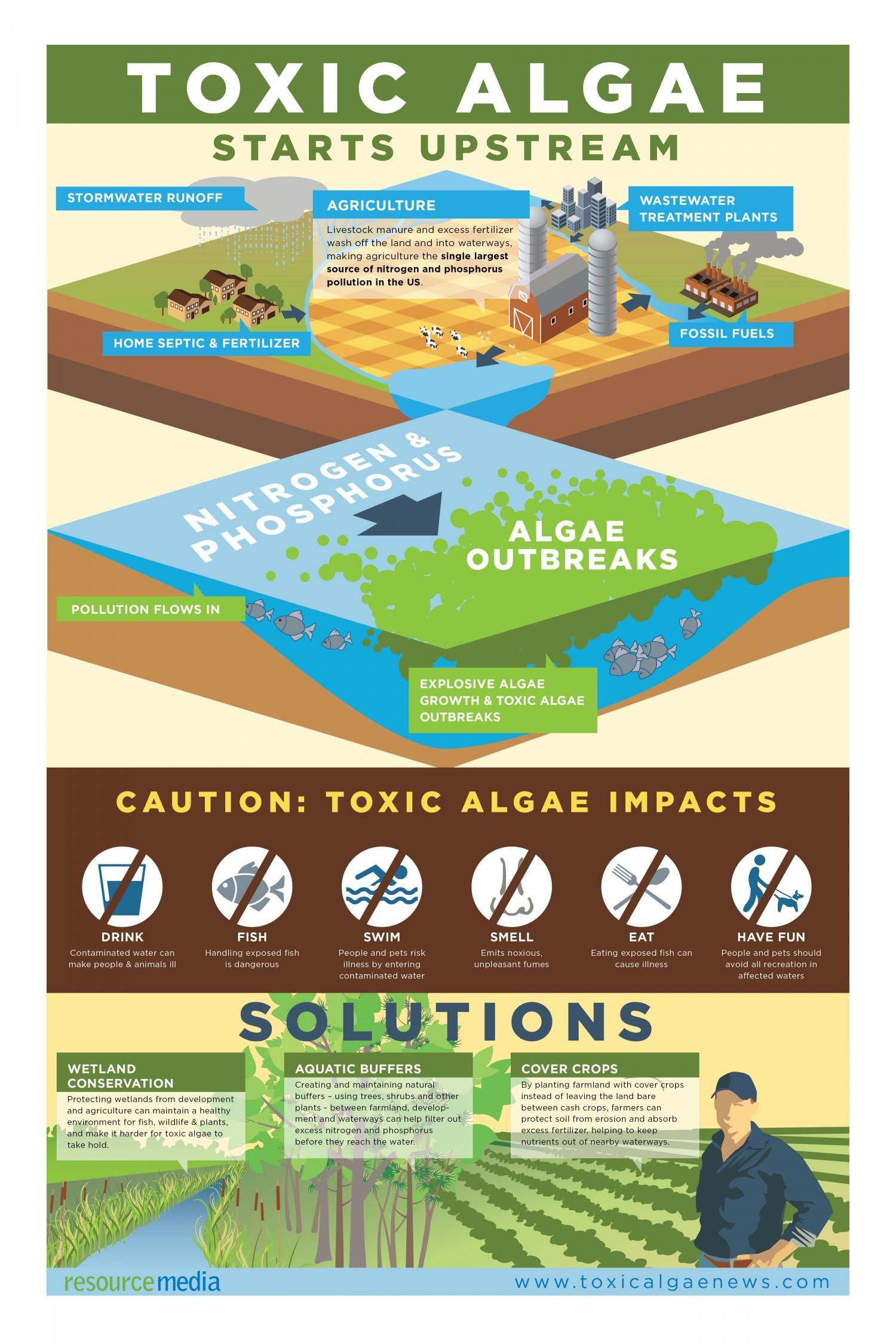 Algae Infographic