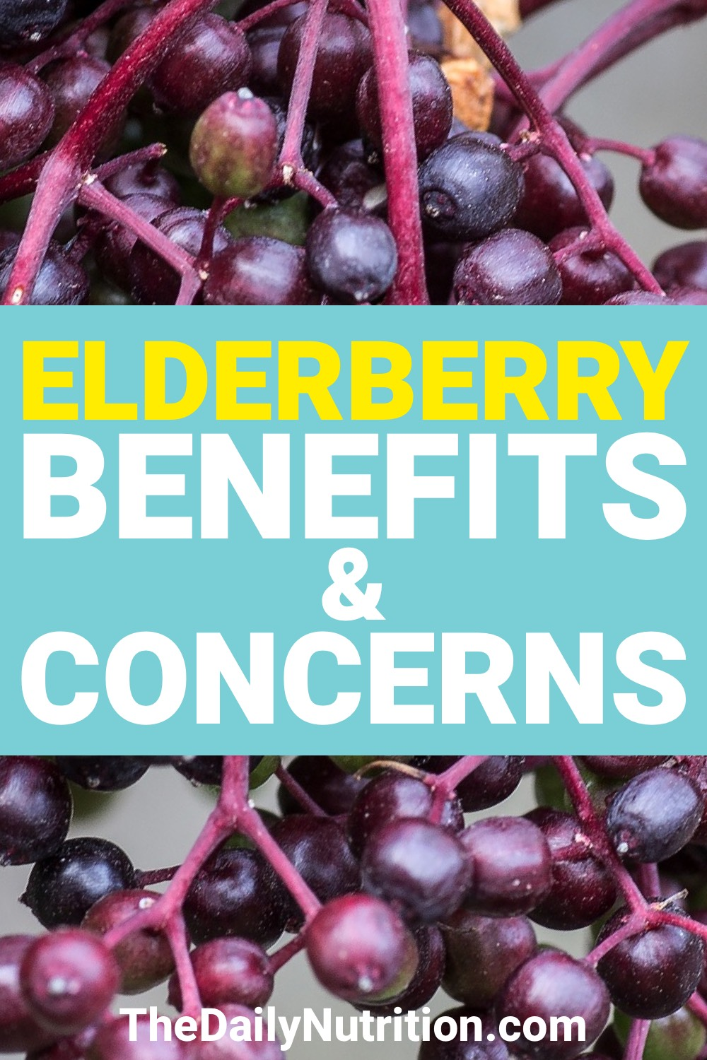 Elderberries are a fruit that's beneficial to your health. Here are 5 elderberry benefits that you should be aware of.