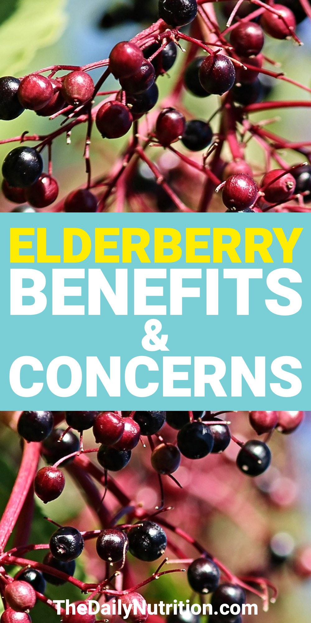 Elderberries are going to help you through any sickness you have. Here are other elderberry benefits that you need.