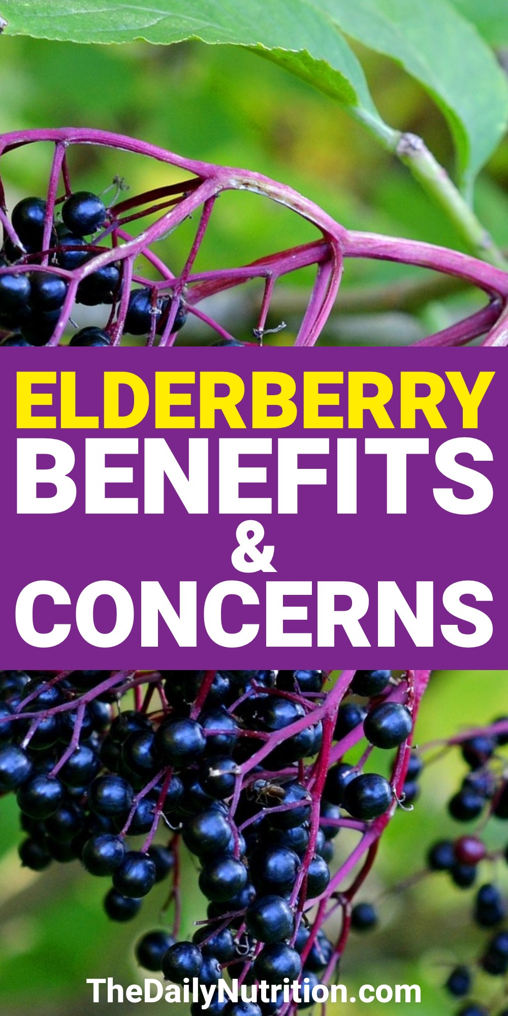 When you're sick, the elderberry can help make you feel better. Find out 5 other elderberry benefits here.