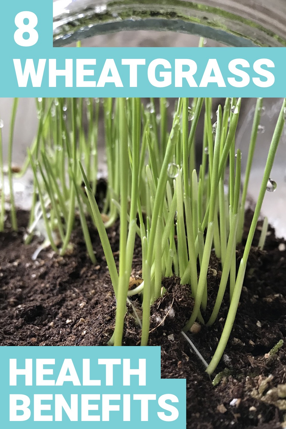 Eating wheatgrass may seem odd, but it's very healthy for you. Here are 8 wheatgrass benefits that'll improve your health.