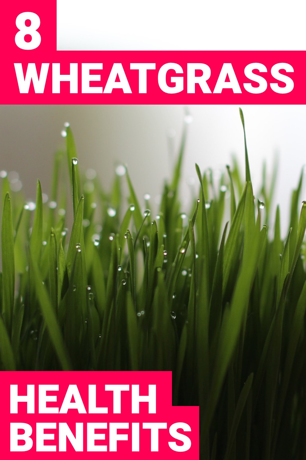 Having wheatgrass will improve your healthy greatly. Here are 8 wheatgrass benefits you need.
