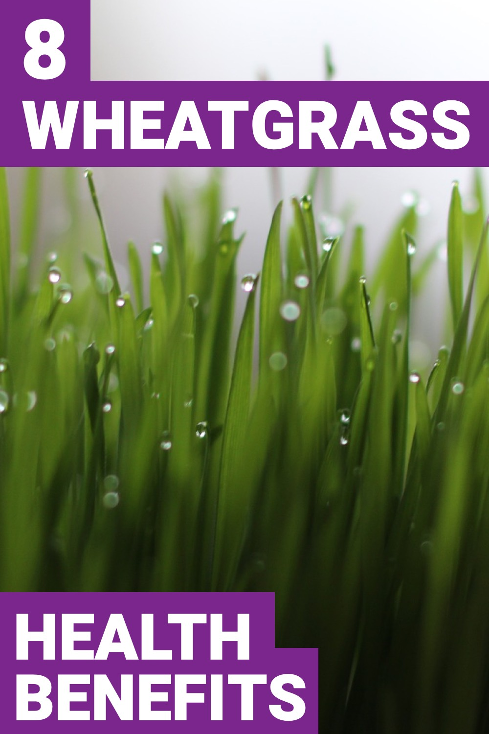 If you want something healthy to incorporate in your diet, consider wheatgrass. Here are 8 wheatgrass benefits you'll love.