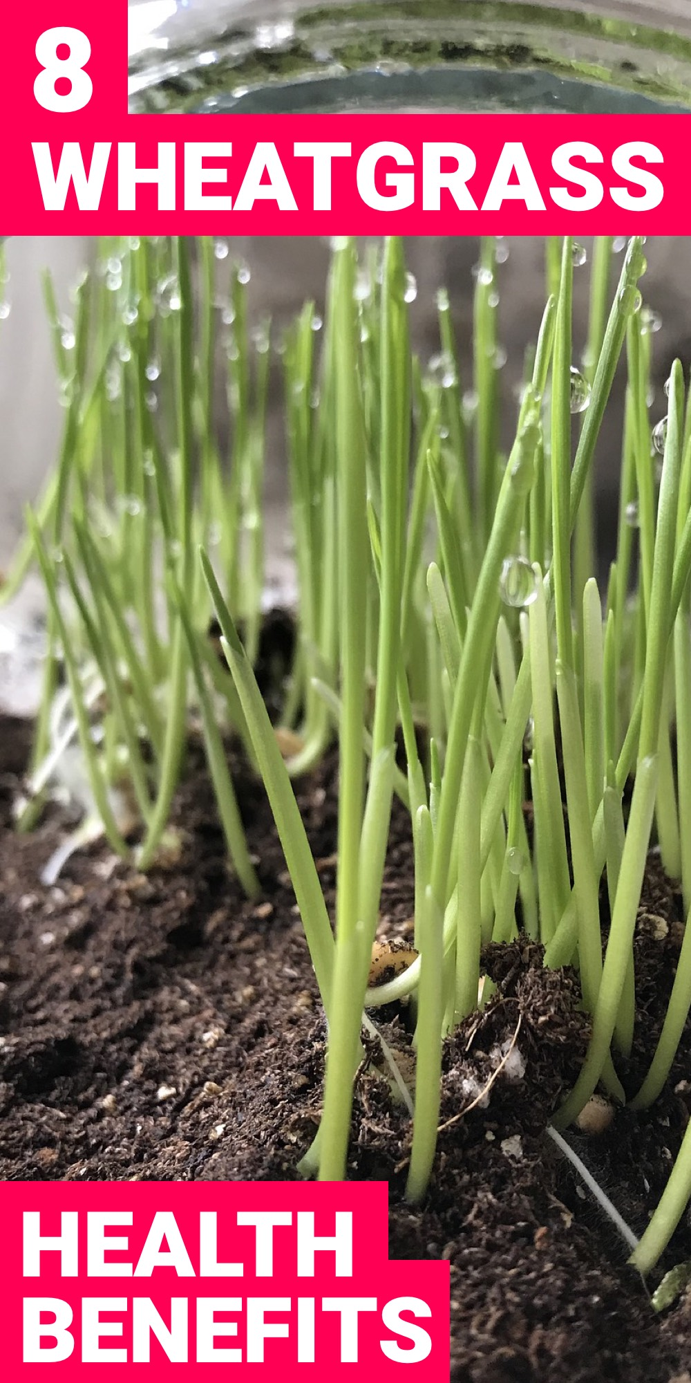 With wheatgrass in your diet, your health will be improved a lot. Here are 8 wheatgrass benefits that you need in your life.