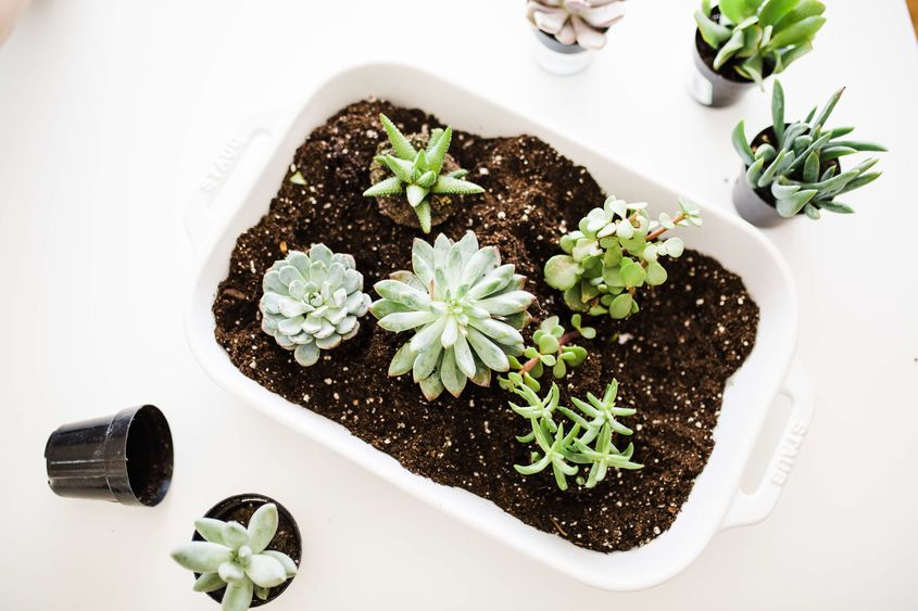 2018 04 Iha Creative Planters You Can Find In Your Kitchen 6 Resize