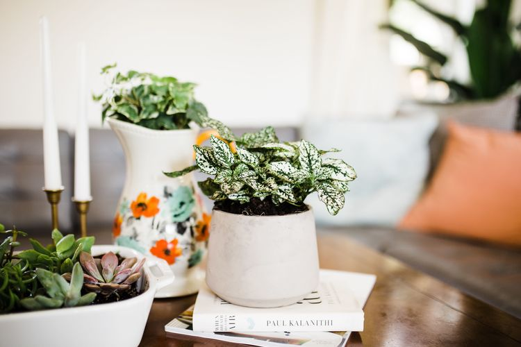 Creative Planters You Can Find in the Kitchen