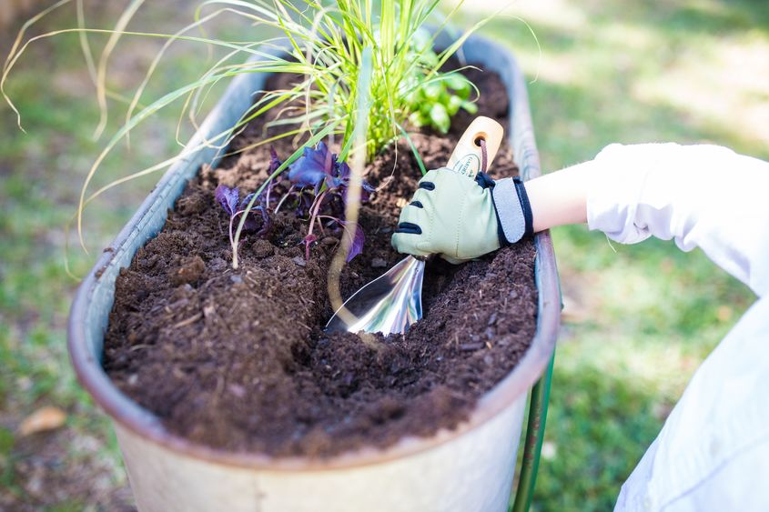 Toddler Friendly Gardening 4