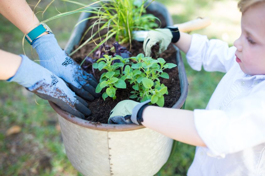 Toddler Friendly Gardening 5