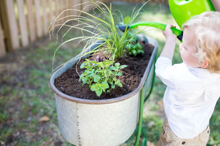 Toddler Friendly Gardening 8