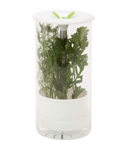 Featured Product Glass Herb Preserver