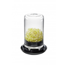 Featured Product Sprouting Jar