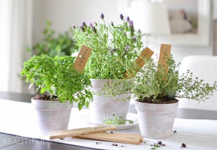 3 Ways to Freeze Fresh Herbs