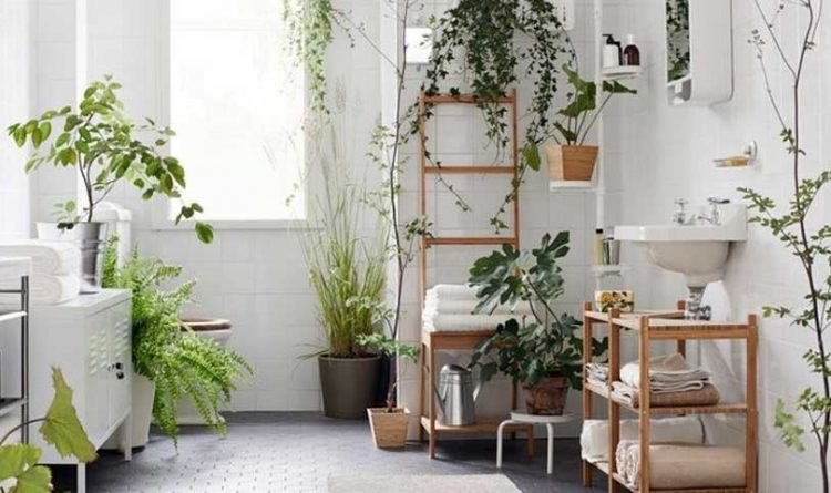 Shower Plants Are Going to Transform Your Bathroom
