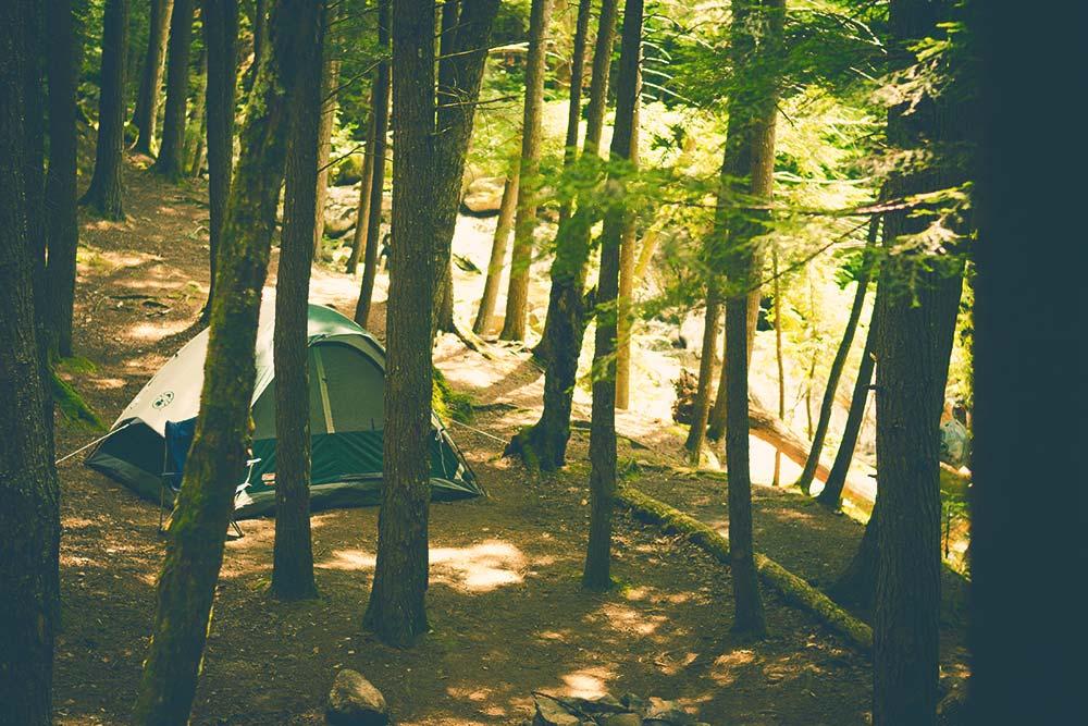 An Amazing Journey Through the Wilderness 8